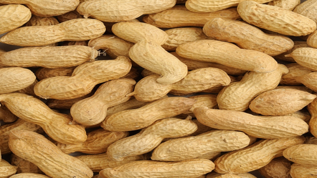 Groundnut Commodity Trading